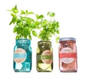 Organic Herb Kit